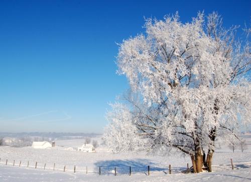 Hoar frost defined