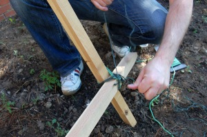 tying twine around the stakes