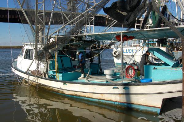 Shrimp boat unloading.