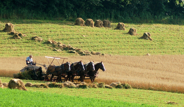 Mowing oats by Bruce Stambaugh
