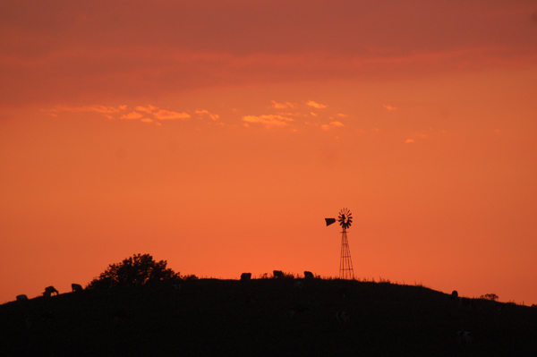 Cows grazed at sunset by Bruce Stambaugh