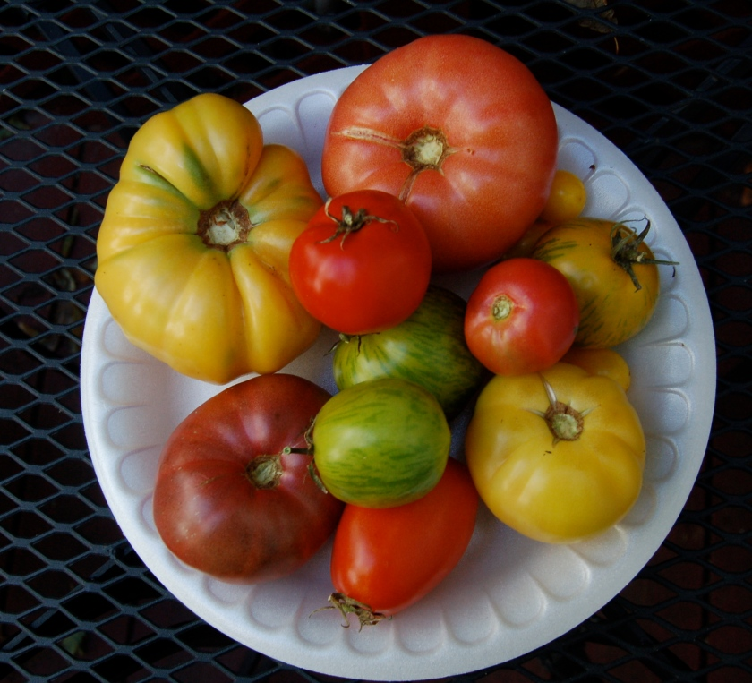 Mixed tomatoes by Bruce Stambaugh