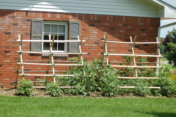 Tomatoes mid-June by Bruce Stambaugh