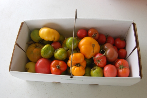 Picked tomatoes by Bruce Stambaugh