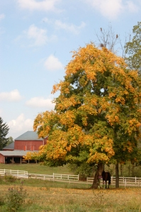 Fall in Ohio's Amish country by Bruce Stambaugh