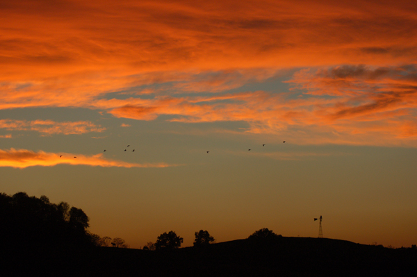 Fall sunset with geese by Bruce Stambaugh