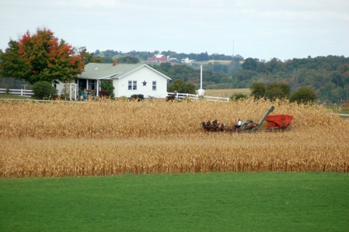 Picking corn in Amish country by Bruce Stambaugh