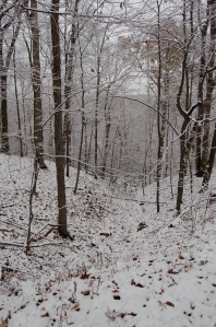 Snowy woods by Bruce Stambaugh
