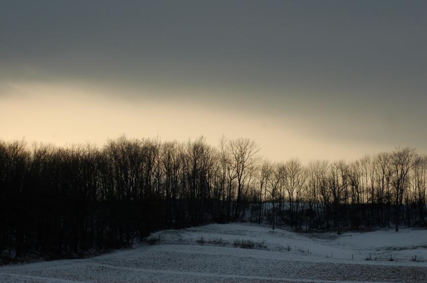 Treelined pasture by Bruce Stambaugh