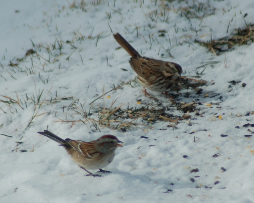 Two sparrows by Bruce Stambaugh