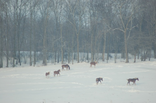 Horses play in the snow by Bruce Stambaugh