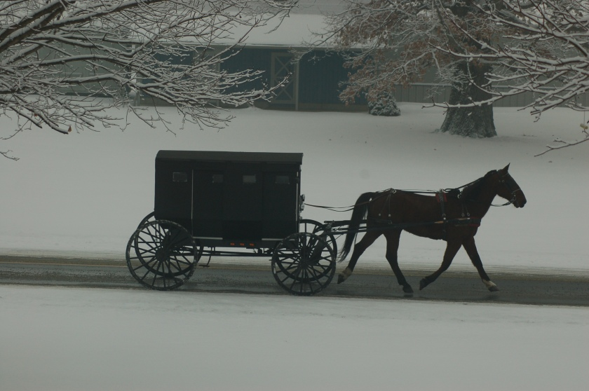 Horse and buggy on CR 201 by Bruce Stambaugh