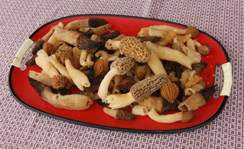 Morel mushrooms by Bruce Stambaugh