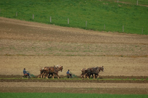 Plowing by Bruce Stambaugh