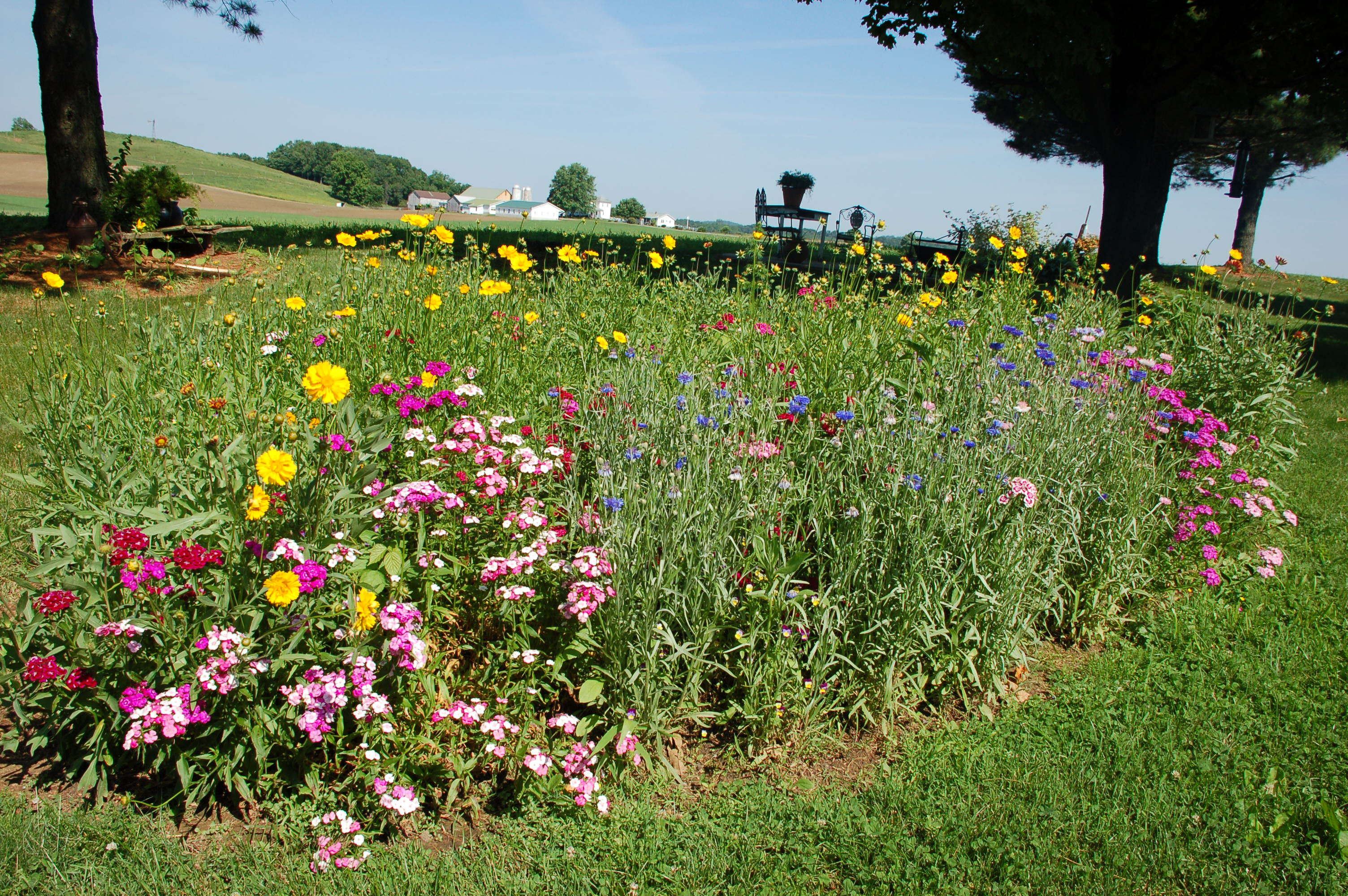 The days we have waited for roadkill crossing for Wildflower garden designs
