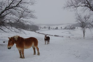 Horses in snow by Bruce Stambaugh