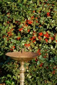 Holly berries by Bruce Stambaugh