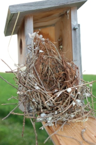 Empty nest by Bruce Stambaugh