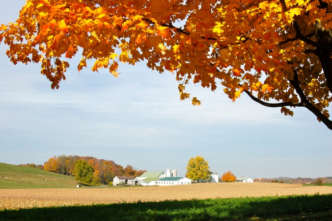 Fall in Amish country Ohio by Bruce Stambaugh