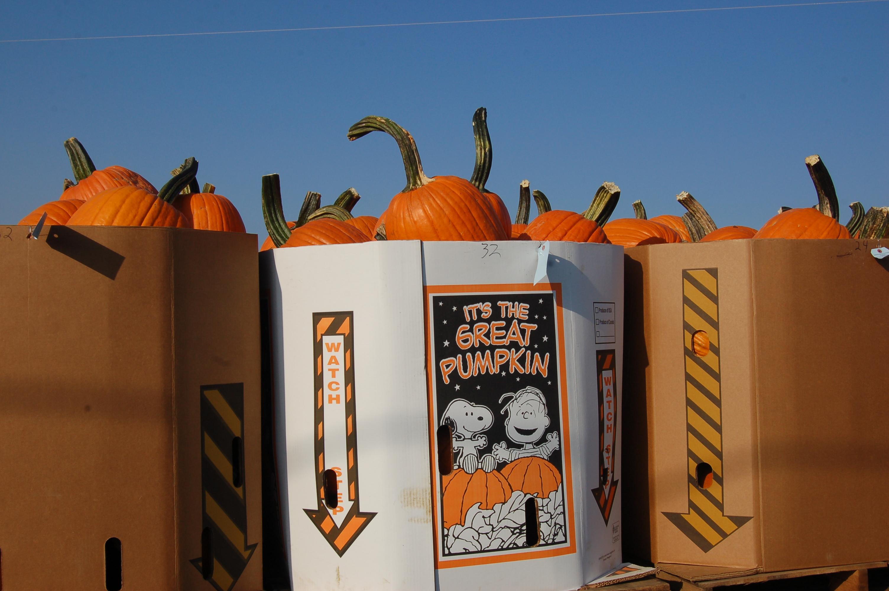 Great pumpkin by Bruce Stambaugh