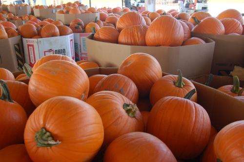 Large pumpkins by Bruce Stambaugh