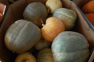 Colorful pumpkins by Bruce Stambaugh