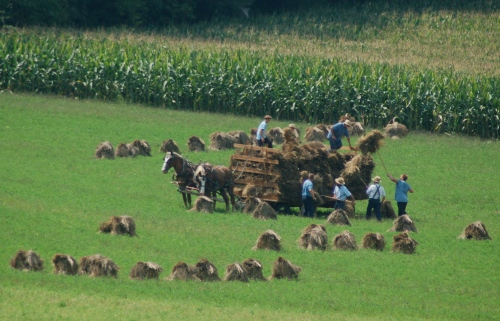 Amish harvest by Bruce Stambaugh