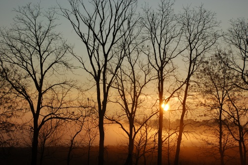Foggy sunrise by Bruce Stambaugh