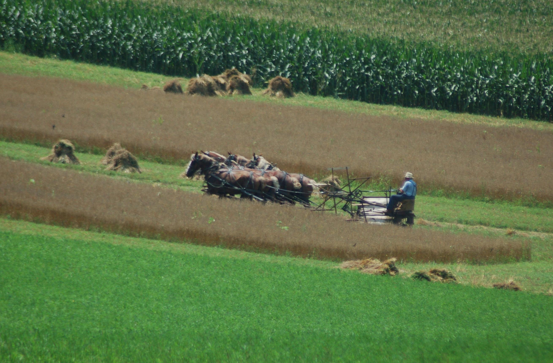 Lush harvest by Bruce Stambaugh