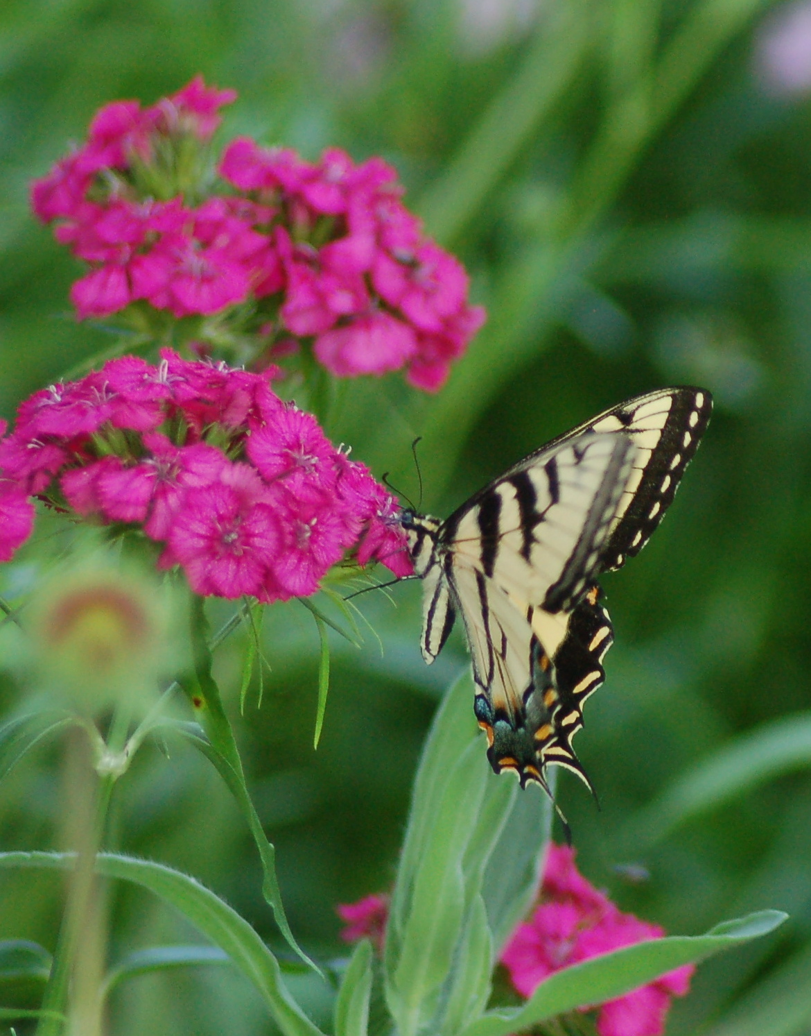 Floral and fauna by Bruce Stambaugh