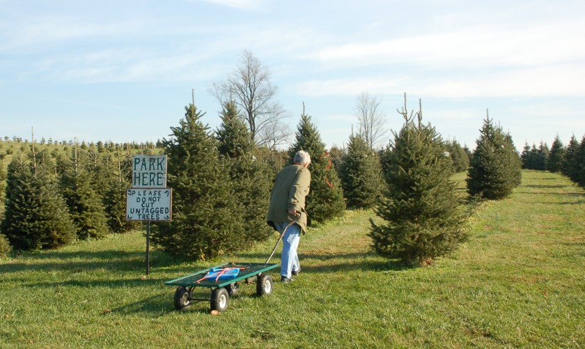 Christmas tree cutting by Bruce Stambaugh