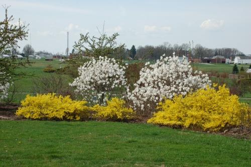 Flowering shrubs by Bruce Stambaugh