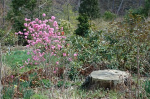 Flowers and stump by Bruce Stambaugh