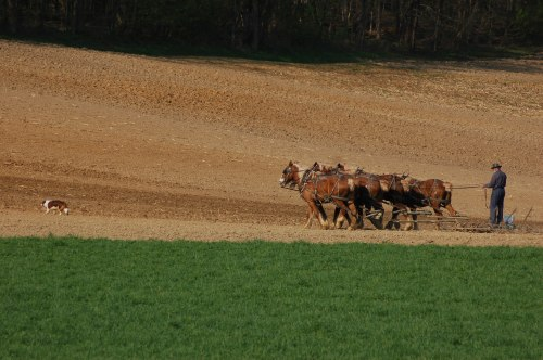 Spring plowing by Bruce Stambaugh