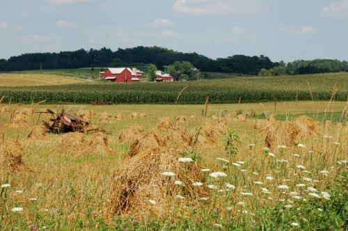 Wheat and corn by Bruce Stambaugh