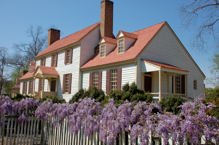 Williamsburg wisteria by Bruce Stambaugh