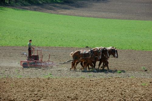 Workhorses by Bruce Stambaugh