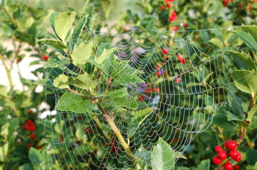 Dewy web by Bruce Stambaugh