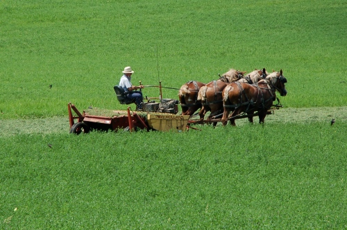 Mowing hay by Bruce Stambaugh