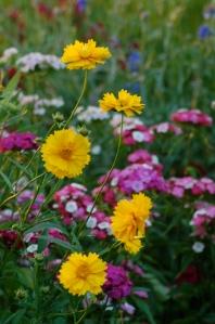 Wildflowers by Bruce Stambaugh