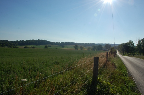 Sunny walk by Bruce Stambaugh
