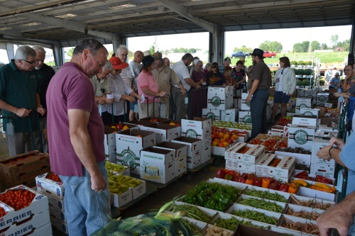 Produce auctioning by Bruce Stambaugh