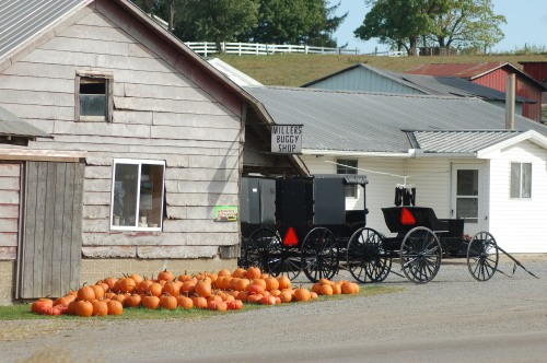 Pumpkins and buggies by Bruce Stambaugh