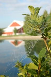 Dewy web by Bruce Stambaugh