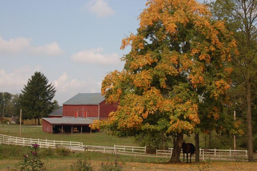 Tinted tree by Bruce Stambaugh