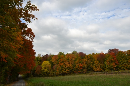 Rural leaves by Bruce Stambaugh