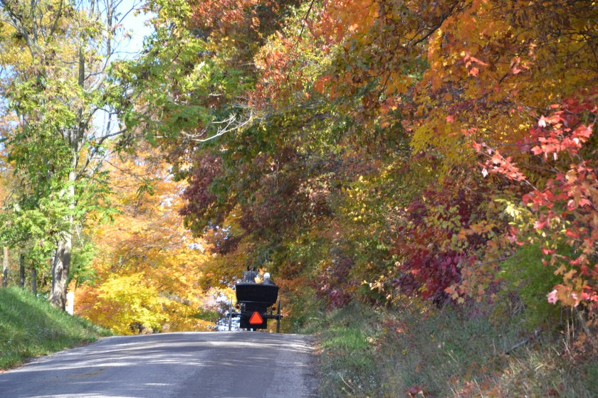 Buggy on fall day by Bruce Stambaugh