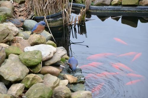 bluebirdsandfishbybrucestambaugh