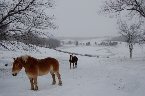 horsesinsnowbybrucestambaugh