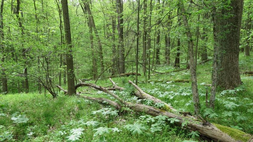 springwoodsbybrucestambaugh